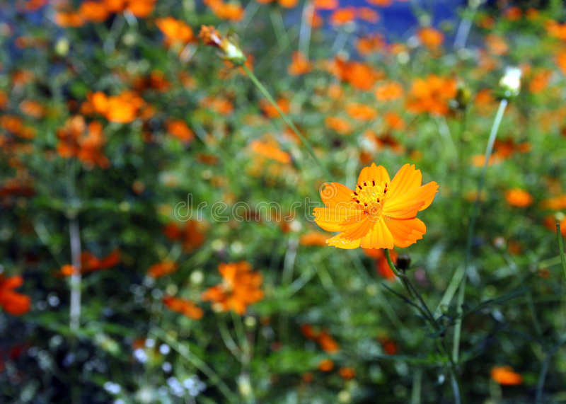 Download Flower power arkivfoto. Bild av blodsugare, india, många - 503320