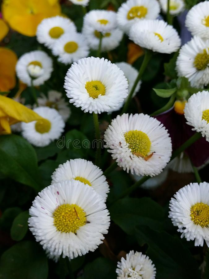 Flower power imagem de stock royalty free