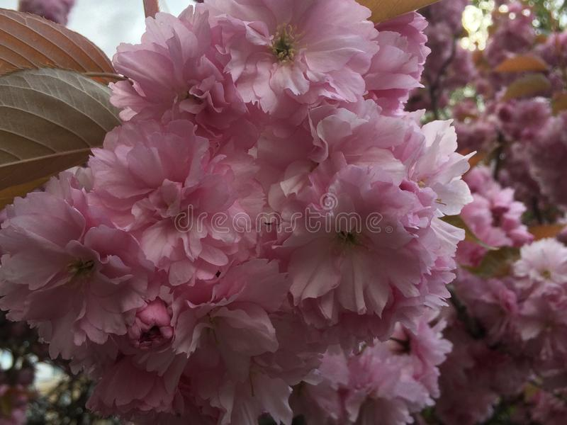 Flower power immagine stock