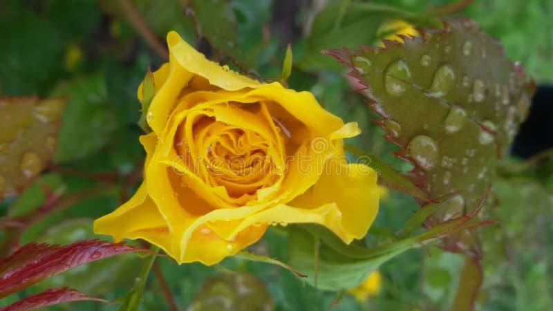 Flower power stockbild