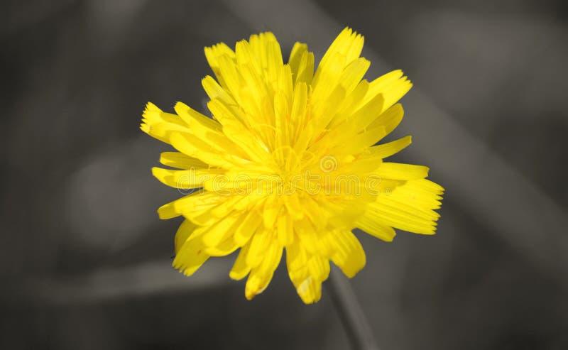 Flower power foto de archivo libre de regalías