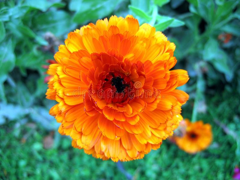 Flower Power Stock Photography