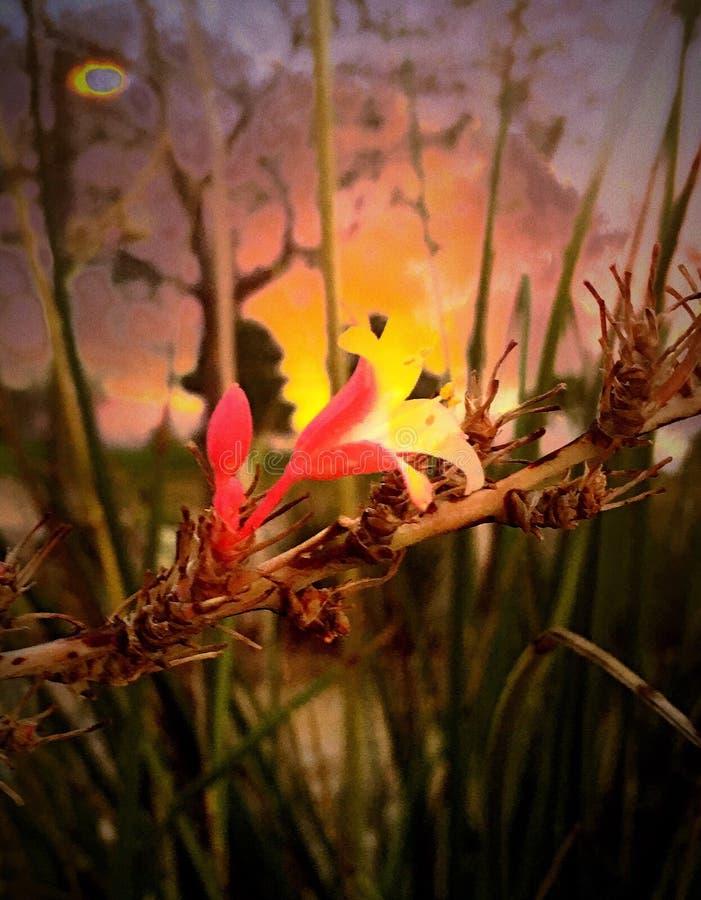 Flower power photographie stock libre de droits