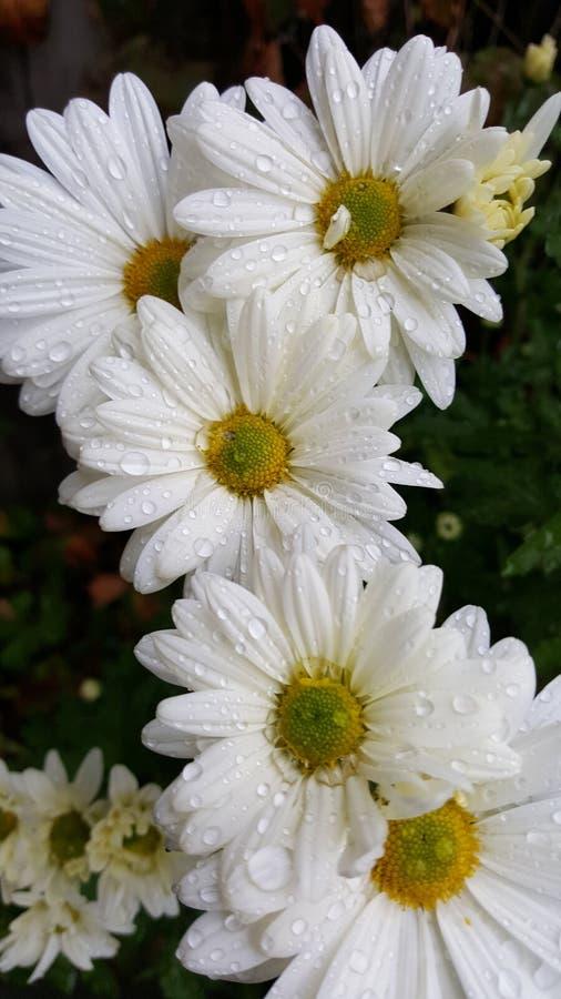 Flower power adorabile fortunato immagini stock libere da diritti