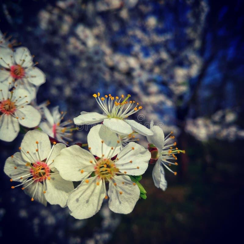 Flower power, Berlino, Germania immagine stock libera da diritti