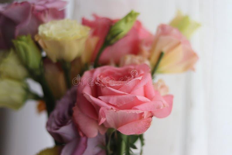 Flower power-Rosa und purpurrote Rosen stockfotos