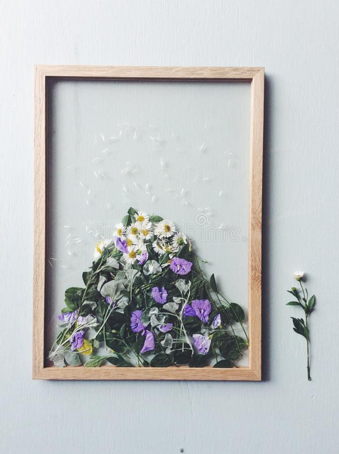 Flower press picture frame stock images