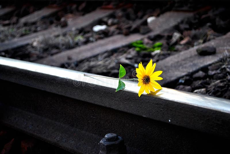 Flower on rails stock photos