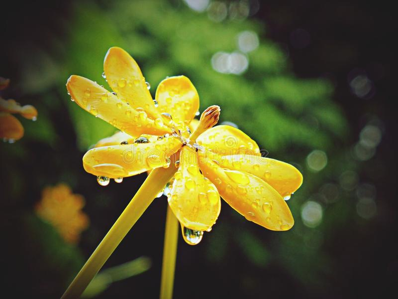 Flower after rain stock images