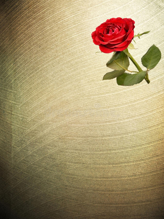 Flower red Rose paper textures. stock images