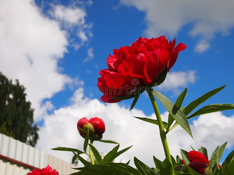 Flower, Red, Sky, Plant royalty free stock photo