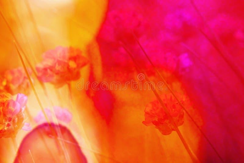 Flower, Red, Yellow, Orange stock photography