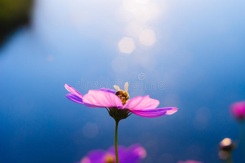 Flower rimlight and bee stock images