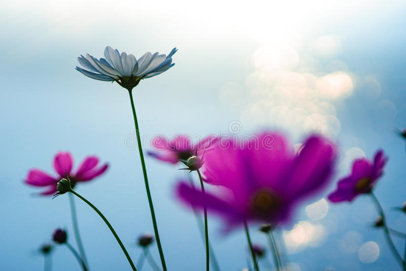 Flower with rimlight royalty free stock photography