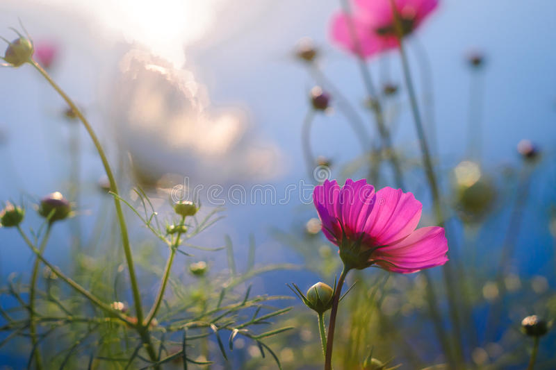 Flower with rimlight stock photography