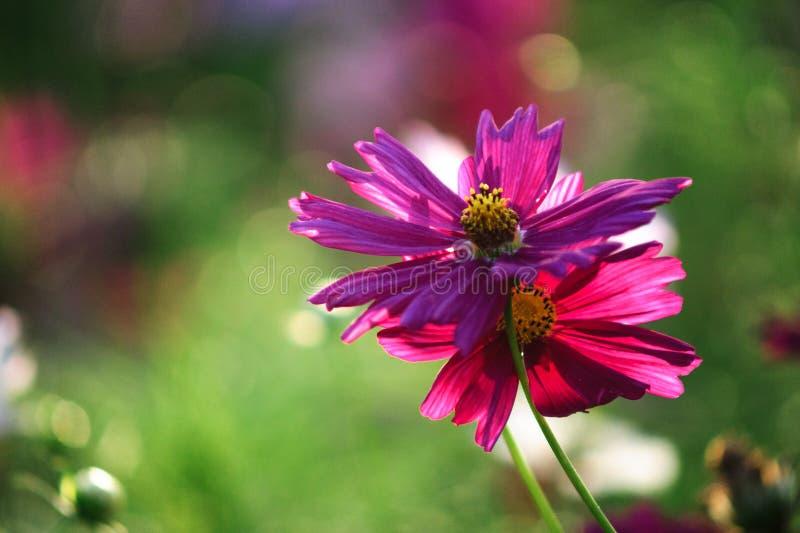 Flower rimlight stock photos
