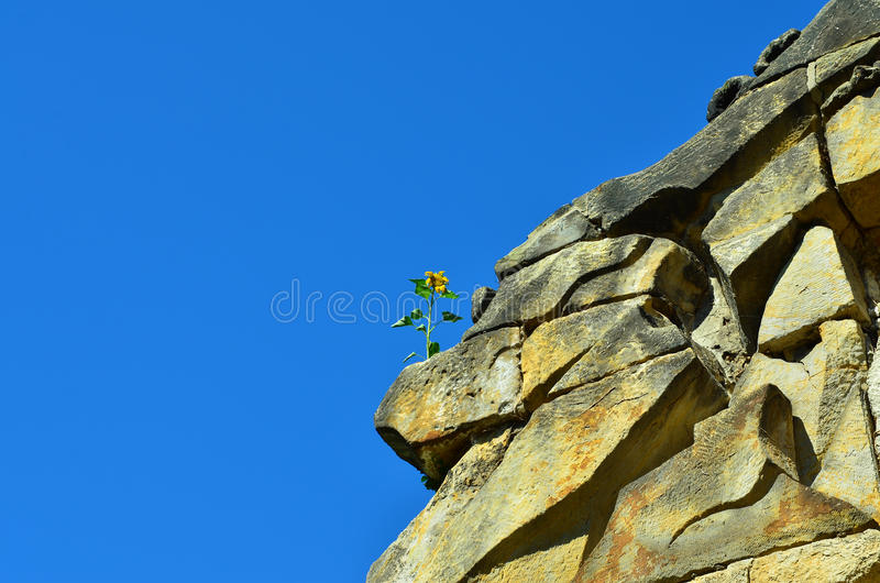 Download Flower on the rocks stock image. Image of blue, drought - 36979563