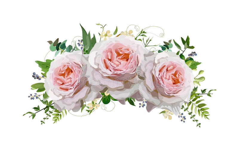 Flower rose Bouquet vector design wreath. Peach, pink roses, eucalyptus, blue privet berry herbal plant mix. Greeting cute lovely royalty free illustration