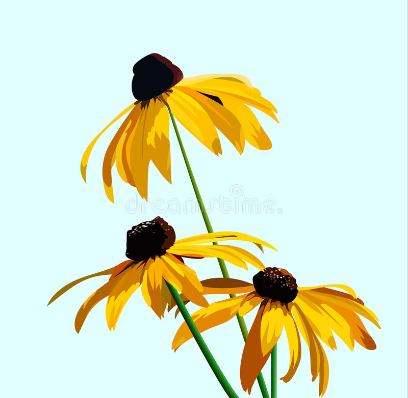 Flower rudbeckia vector illustration