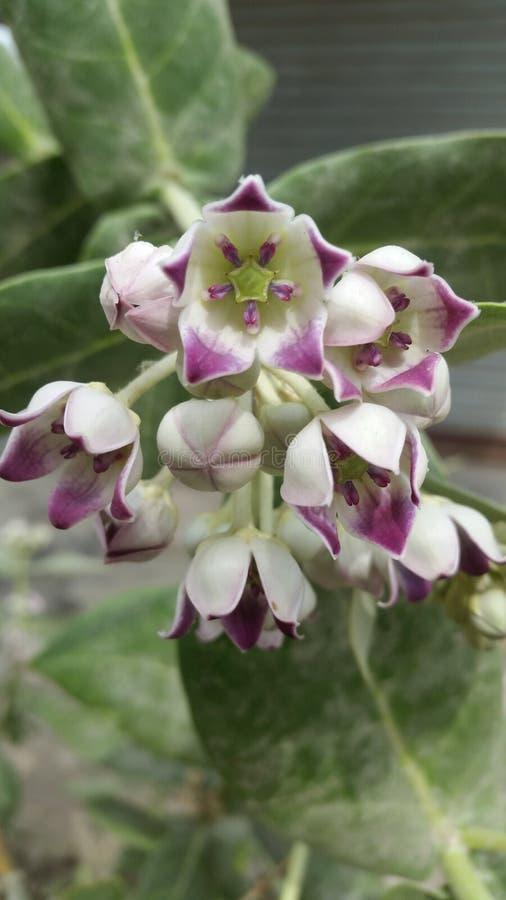 Flower& x27; s immagine stock libera da diritti