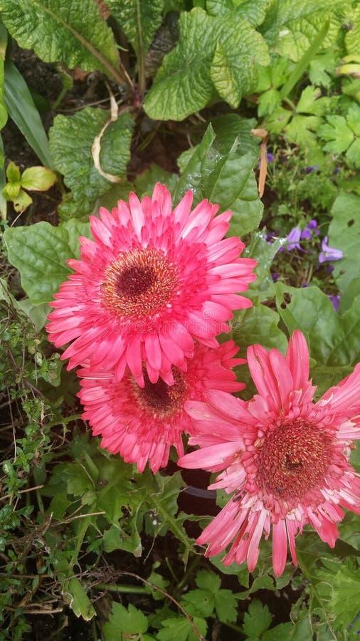 Flower& x27; s imagen de archivo
