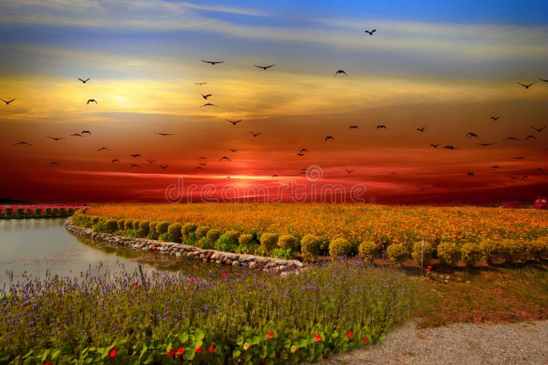 Flower sea, Taitung, Taiwan. Flower sea in flower valley in sunset, birds flying over. Beautiful landscape stock images