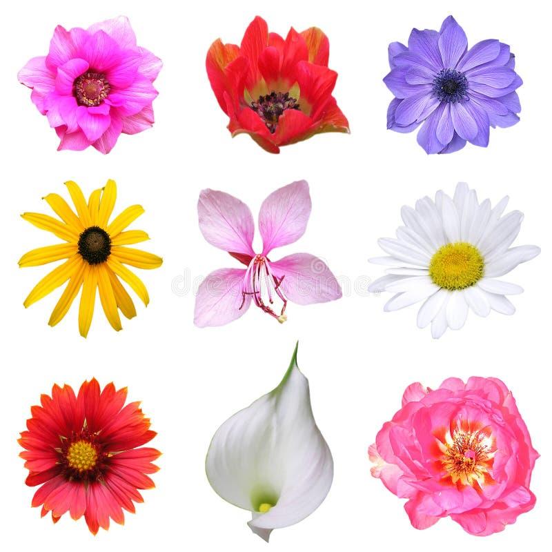 Free Flower Set Stock Images - 5566494