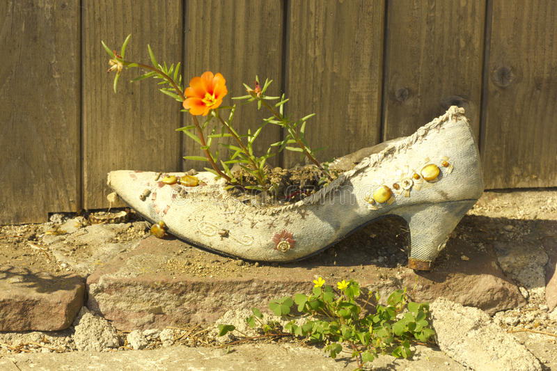 Flower in a shoe_2 royalty free stock images