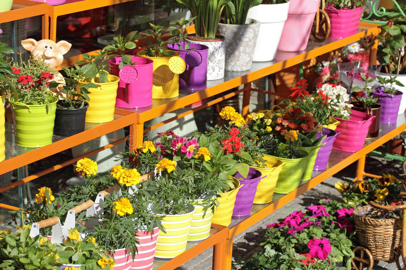 Flower shop. Outdoor stand with colorful flower pots royalty free stock photos
