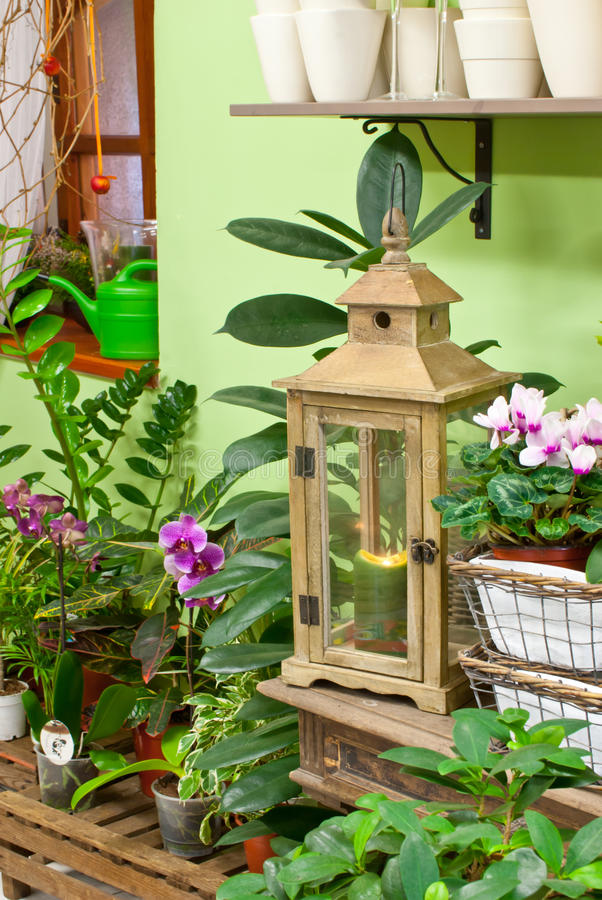 In flower shop. Old wooden lantern in the florist shop stock photography