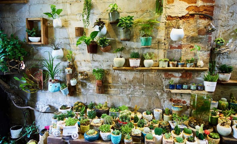 Flower shop. Interior of flower shop. Many potted flowers in old flower store stock photography