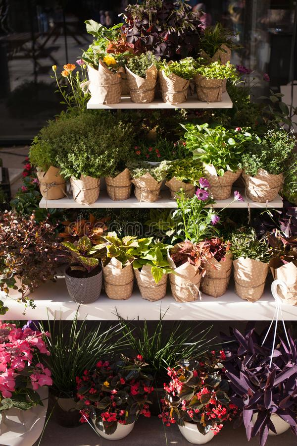 Flower shop with plants in pots. Vertically.  royalty free stock images