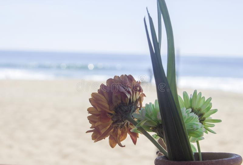 Flower on the shore of the ocean, peace, tranquility. Nature, mexico, pacific, sand, water, travel, tourism, landscape, summer, blue, beautiful, bay, coast stock image