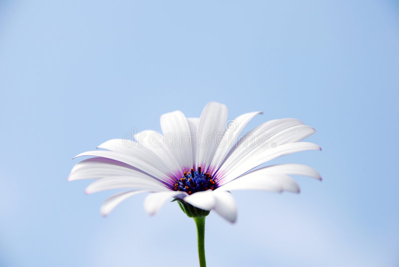Flower on the sky stock image
