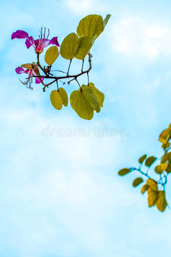 Flower on sky background. Beautiful pink of flower and blue sky stock photo