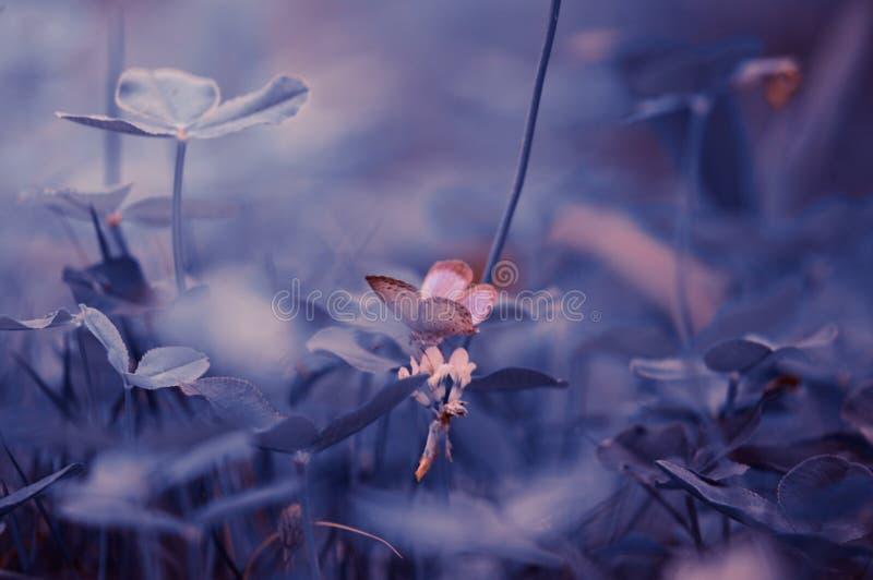 Flower, Sky, Branch, Blossom Free Public Domain Cc0 Image