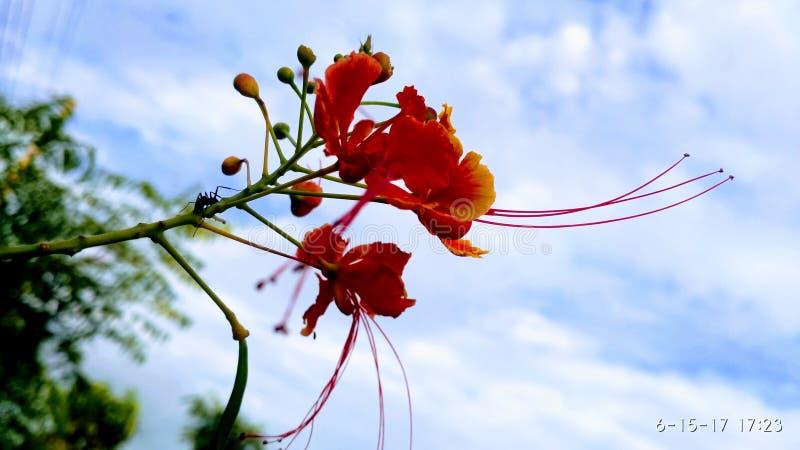 Flower & Sky stock photo