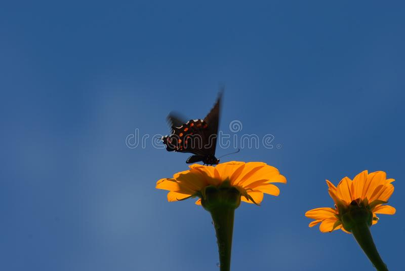 Flower, Sky, Yellow, Insect stock image