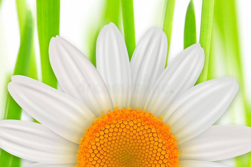 Flower spring background vector illustration