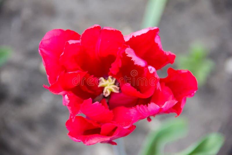 Flower spring flowers outdoor park stock image