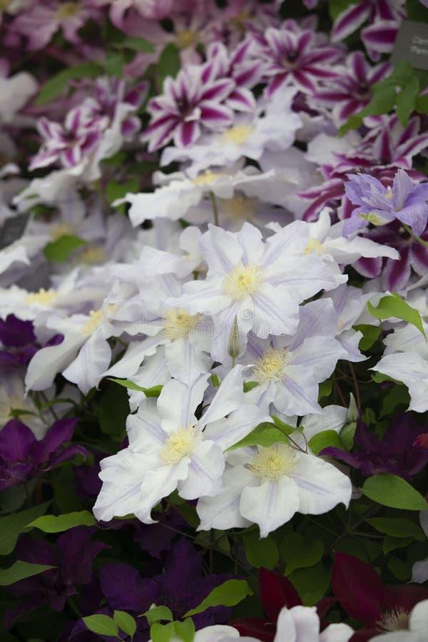 Flower on spring season stock photo