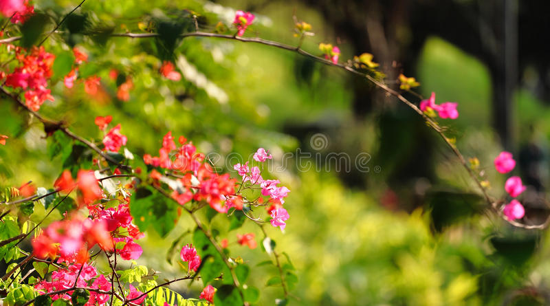 Flower In Spring Time Royalty Free Stock Photo