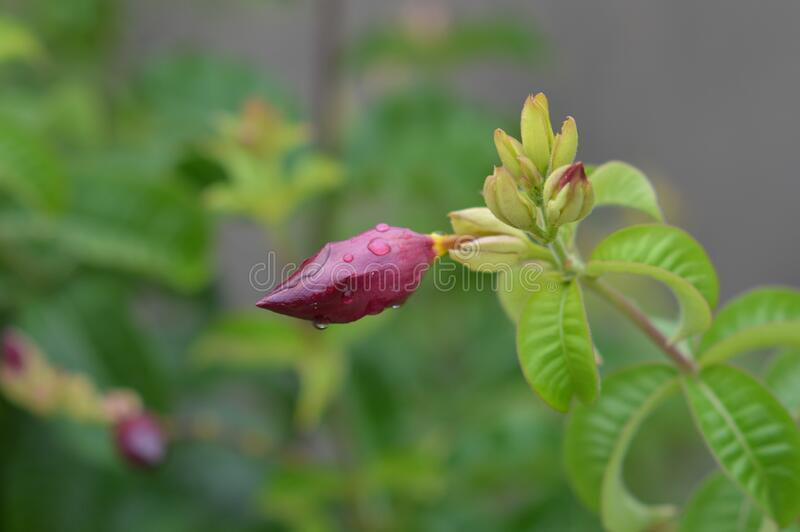 Flower sprouting for a beautiful spring royalty free stock photo