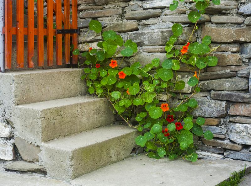 Flower and stairs near stone wall. Home decor stock photo
