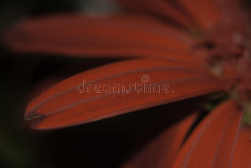 Flower stamen royalty free stock photo