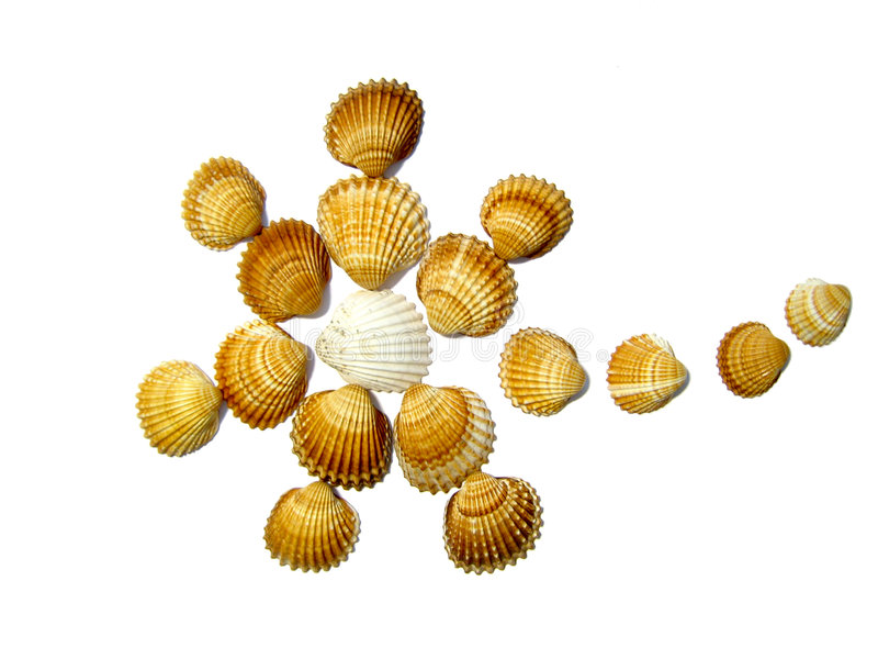 Flower or star made of seashells stock photos