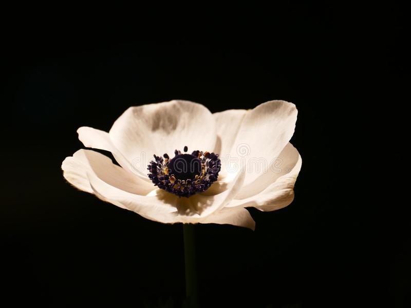 Flower, Still Life Photography, Petal, Plant stock images