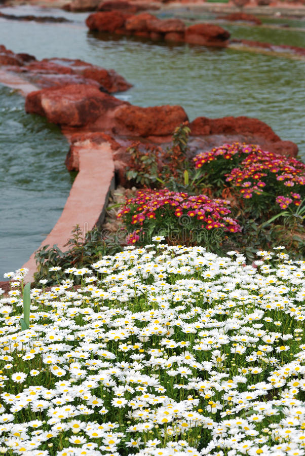 Flower and stone along the river royalty free stock image