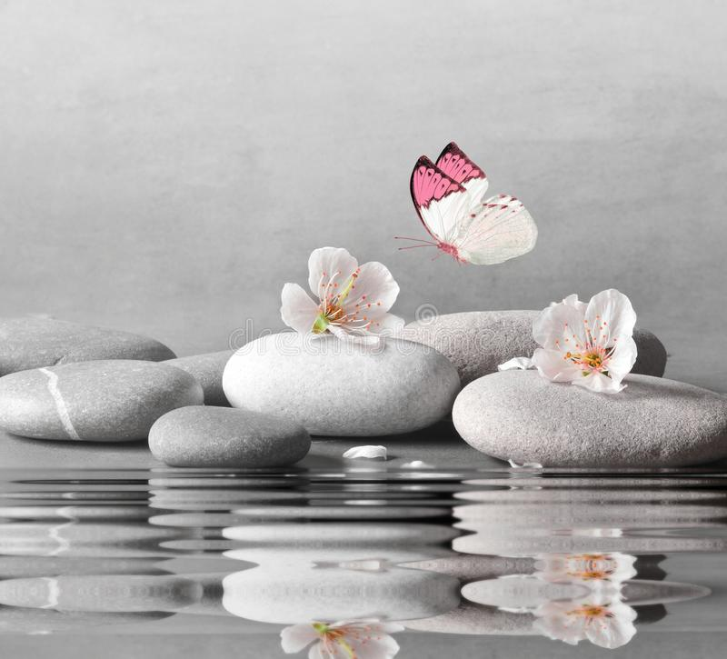 Flower and stone zen spa on water surface and grey background.  royalty free stock image