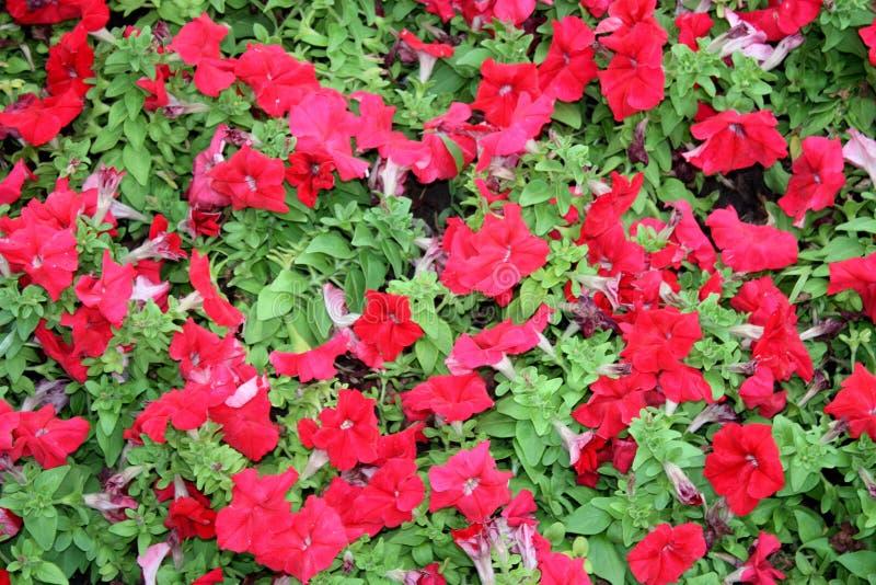 Flower street green grass Bud nature color bright. Petal vegetation Wallpapers beautiful stock photography